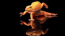 4K Monitor Lizard Wallpaper HQ