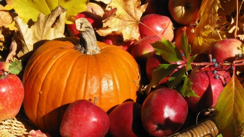 Autumn Harvest wallpapers high quality