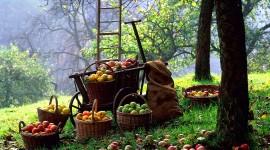Autumn Harvest Desktop Wallpaper