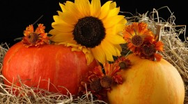 Autumn Harvest Desktop Wallpaper For PC