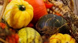 Autumn Harvest Photo