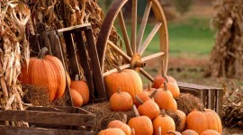 Autumn Harvest Photo Download