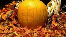 Autumn Harvest Photo Free