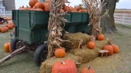 Autumn Harvest Photo#1