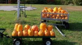 Autumn Harvest Photo#2