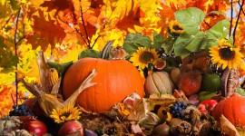Autumn Harvest Wallpaper