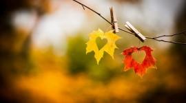 Autumn Heart Best Wallpaper