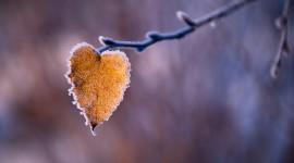 Autumn Heart Desktop Wallpaper