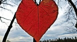 Autumn Heart Photo