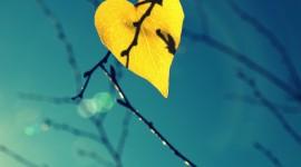 Autumn Heart Photo Download