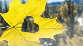 Autumn Heart Photo Free