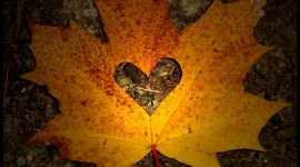 Autumn Heart Wallpaper For Android