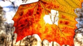 Autumn Heart Wallpaper For IPhone