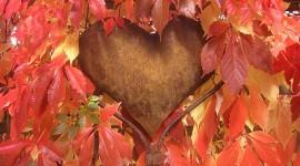 Autumn Heart Wallpaper For PC