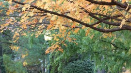 Autumn In The Village Wallpaper For Mobile#1