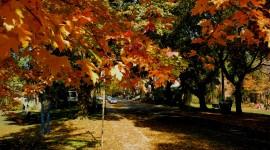 Autumn In The Village Wallpaper Full HD