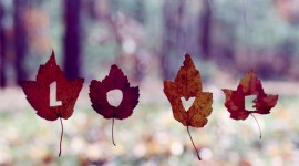 Autumn Love Story Wallpaper Background