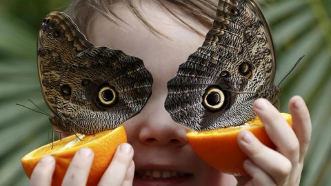 Butterfly Eyes wallpapers high quality