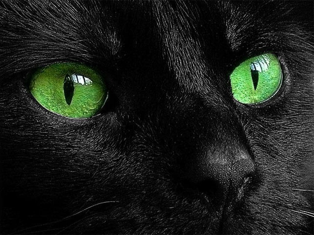 Cats Eyes Wallpapers High Quality Download Free