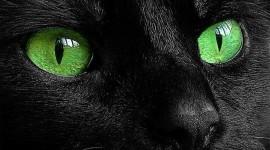 Cat's Eyes Best Wallpaper