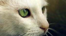 Cat's Eyes Desktop Wallpaper