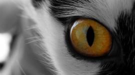 Cat's Eyes Desktop Wallpaper For PC
