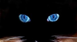 Cat's Eyes Desktop Wallpaper HD