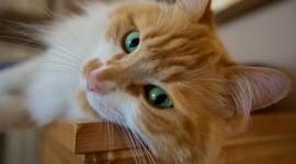 Cat's Eyes Photo
