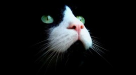Cat's Eyes Photo Download