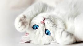 Cat's Eyes Photo Free