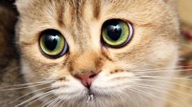 Cat's Eyes Wallpaper 1080p