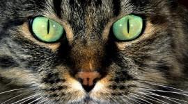 Cat's Eyes Wallpaper
