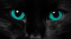 Cat's Eyes Wallpaper For Desktop