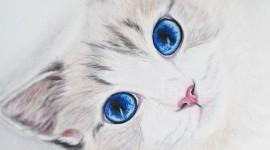 Cat's Eyes Wallpaper For Mobile