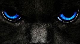Cat's Eyes Wallpaper For PC