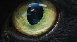 Cat's Eyes Wallpaper Free