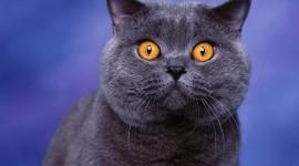 Cat's Eyes Wallpaper Full HD