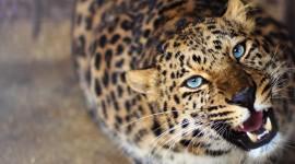 Cheetah 4K Best Wallpaper