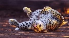 Cheetah 4K Wallpaper Download