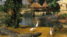 Crocodile Farm Best Wallpaper