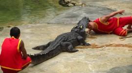 Crocodile Farm Desktop Wallpaper HD