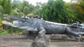 Crocodile Farm High Quality Wallpaper