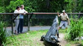 Crocodile Farm Wallpaper Download