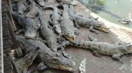 Crocodile Farm Wallpaper For IPhone