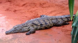 Crocodile Farm Wallpaper For PC
