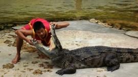 Crocodile Farm Wallpaper Free