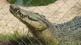 Crocodile Farm Wallpaper HD