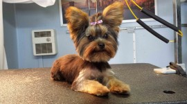 Dog Grooming Photo Download