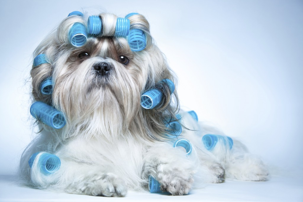 Dog Grooming wallpapers HD