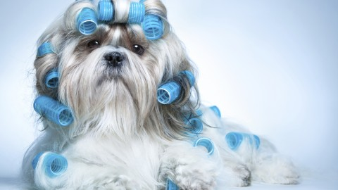 Dog Grooming wallpapers high quality